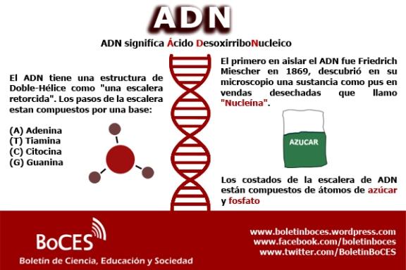 ADN 1